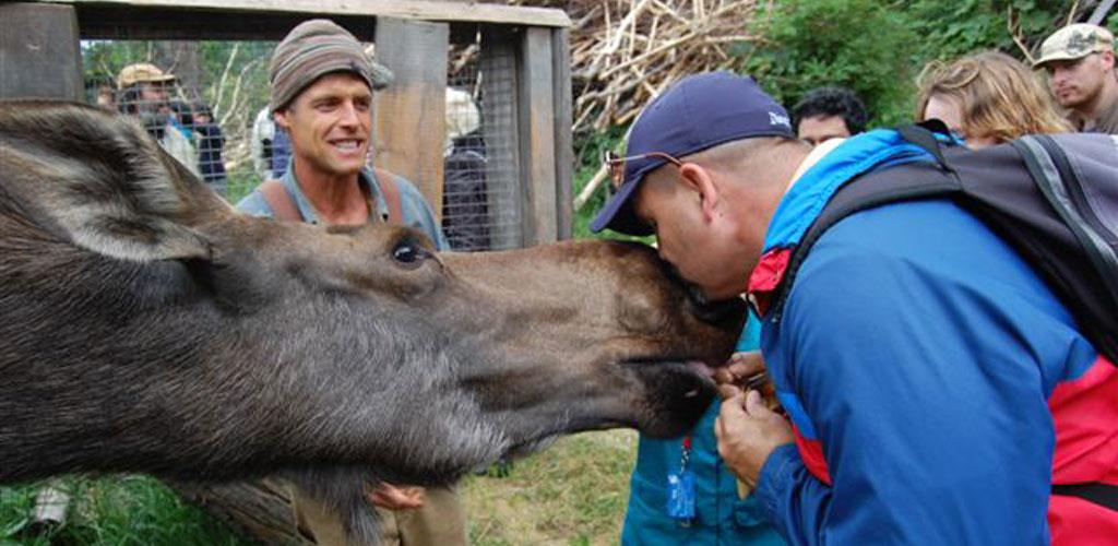 Kiss a Moose